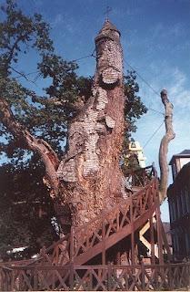 Traditions celtes : le chêne, arbre sacré 8