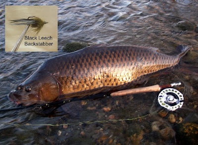 6a1bc499487e2 Colorado Fly Fishing Reports  Big carp on the fly!