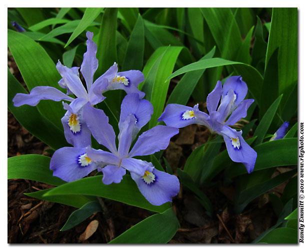 Randy Amp Meg S Garden Paradise April 2010