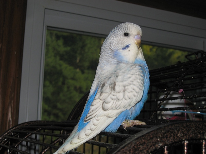 Budgies are Awesome: 2010