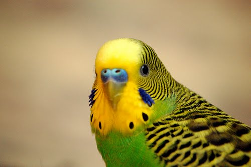 Budgies are Awesome: December 2010