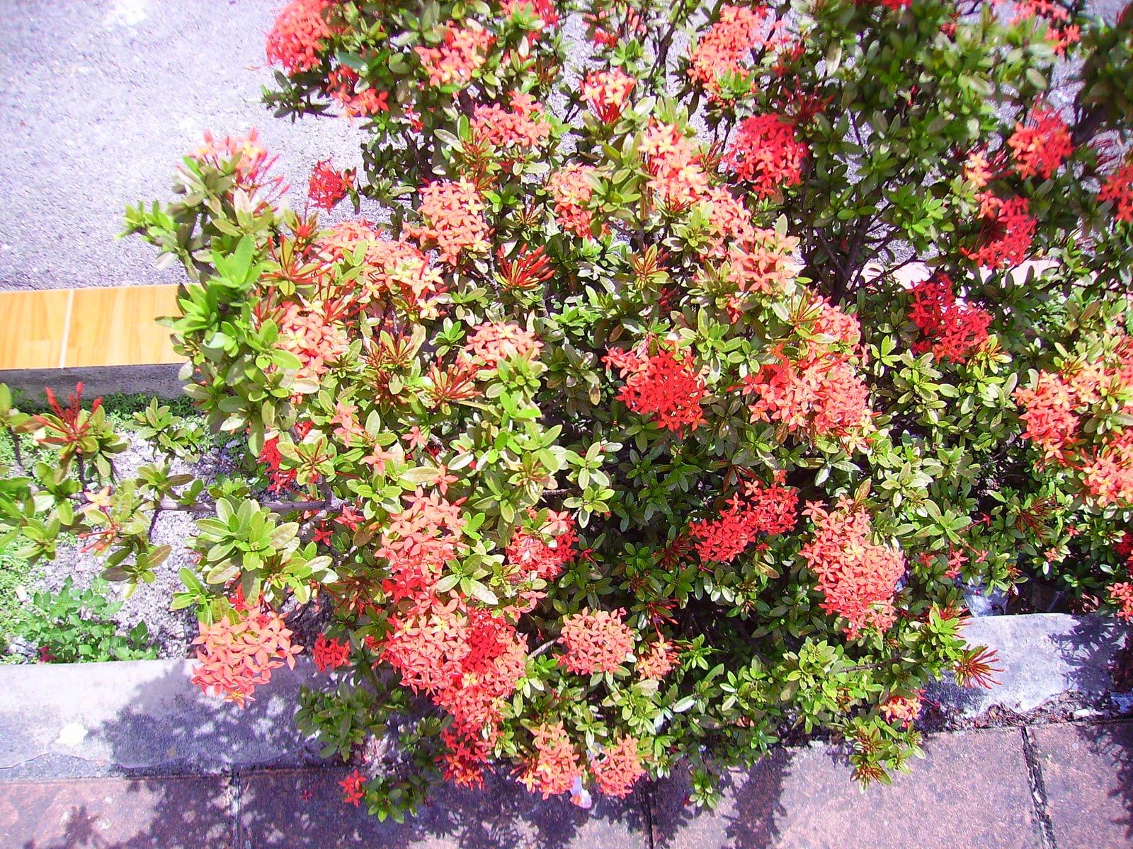 Garden Chronicles: Common plants along the Roadside