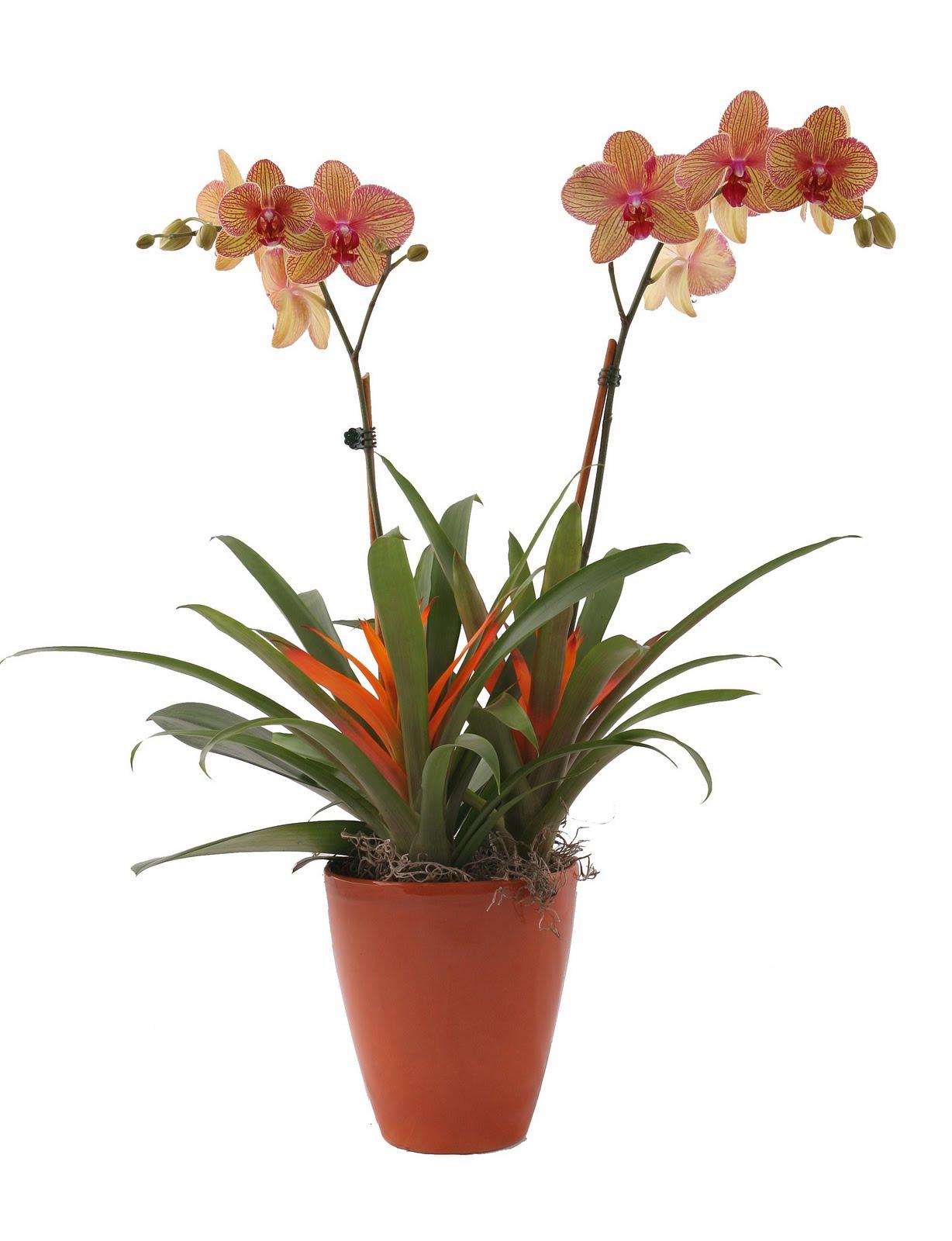 Garden Design Win Two Orchid And Bromeliad Arrangements