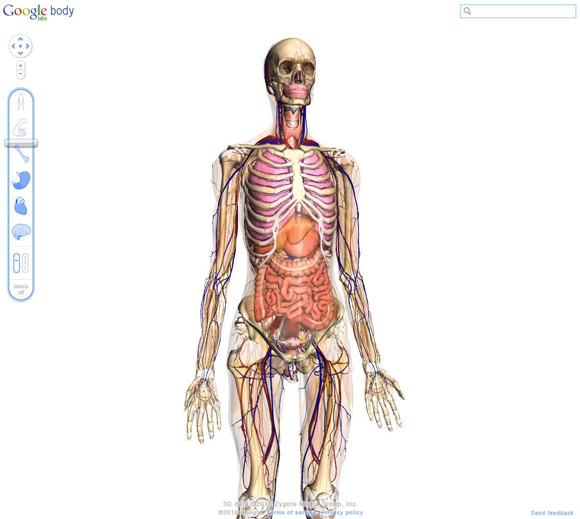Groß Erkunden Den Menschlichen Körper Bilder - Menschliche Anatomie ...
