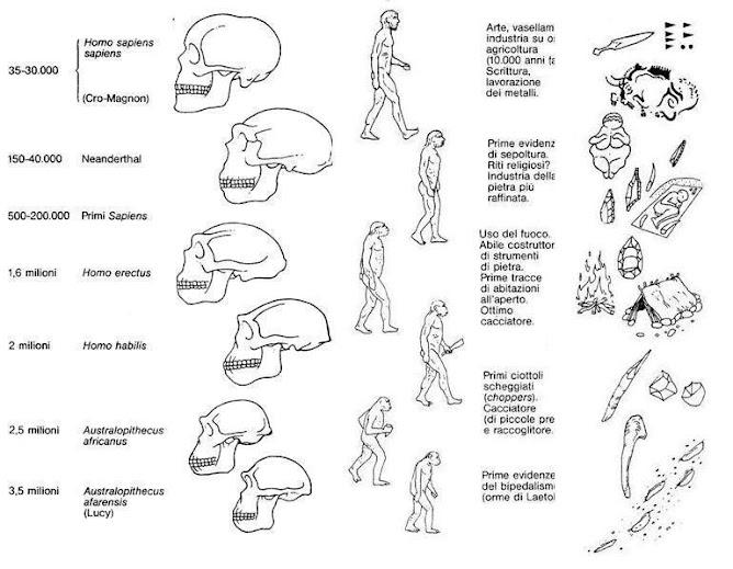 Evoluzione biologica della specie umana