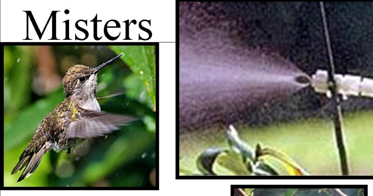 Wild Birds Unlimited Dont Forget The Water Tips to