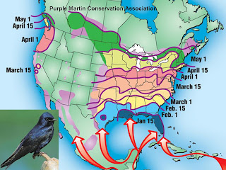 Baltimore Oriole Migration Map Wild Birds Unlimited: Track bird migration with online maps