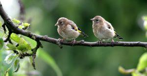Wild Birds Unlimited: August 2010