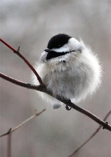 Wild Birds Unlimited: How birds survive cold weather