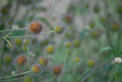Pflanzen, Natur, Herbst,bystrickwerk