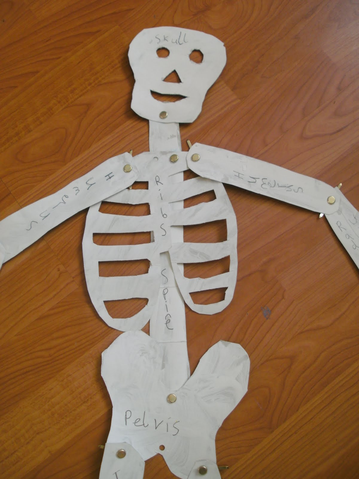 Home School Home Mr Skeleton