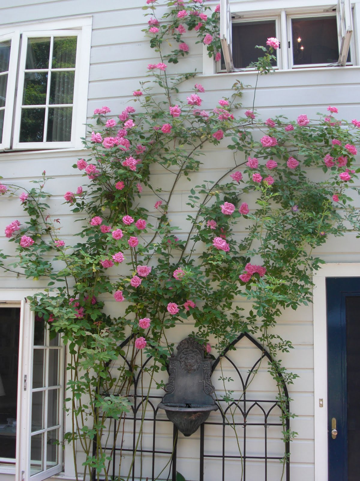 Love Garden Roses: Where Has The Summer Gone?