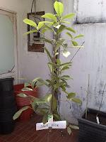 http://tipspetani.blogspot.com/2017/10/jenis-tanaman-yang-memiliki-kekuatan.html