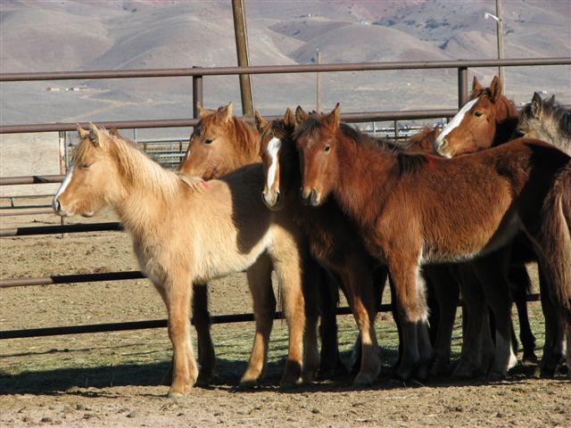 http://2.bp.blogspot.com/_p1UWSy2T2Bg/TUri8E2hyRI/AAAAAAAAAW8/yBX3VNrsfKM/s1600/Antelope16foalswaitmoms.jpg