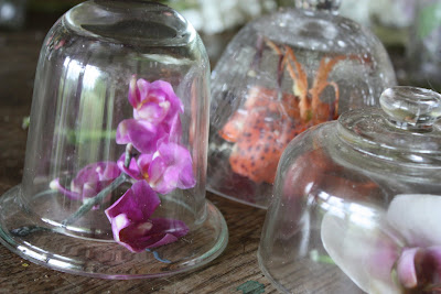 Waxing Flowers for Preservation
