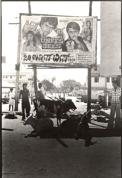 Cinema poster & cows -  India street scene 1970's