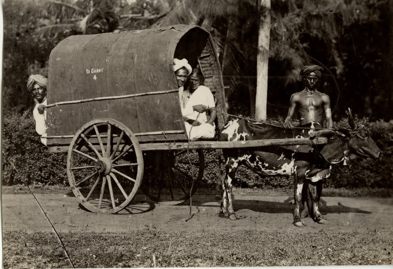 Bullock Cart - Kandy Sri Lanka c1880's