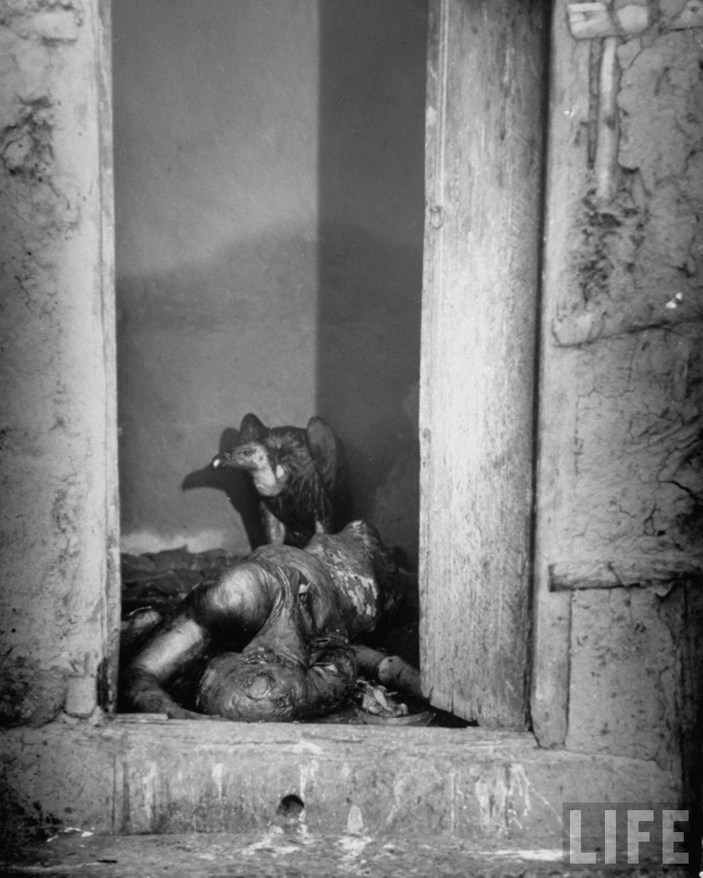 Vulture feeding on a corpse lying abandoned in a doorway after bloody rioting