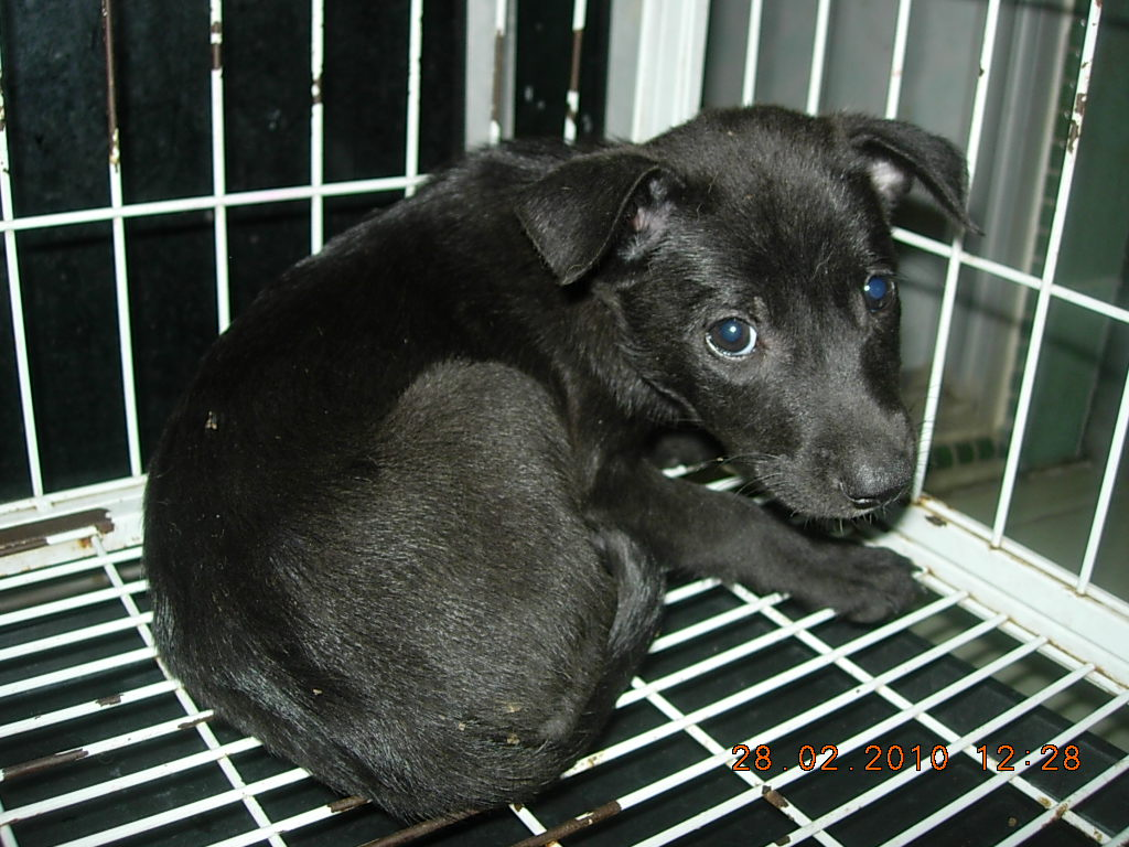 Duuuhvana Klang Pound Mummy Dog Amp Puppies Up For Adoption