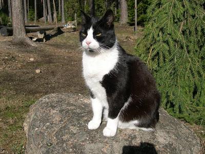 Mustavalkoinen Kissa