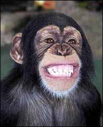 monyet senyum
