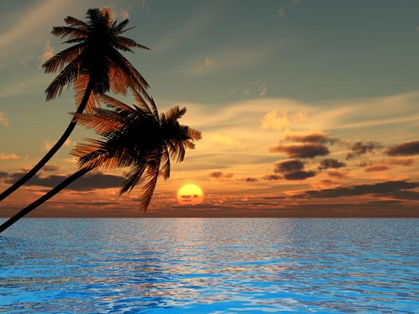 Landscape  Tropical Be...