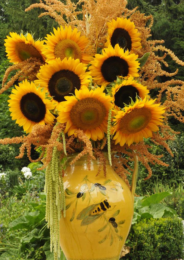 Growing With Plants Van Gogh