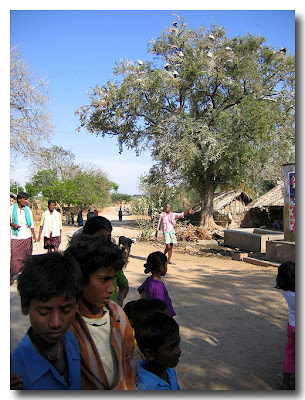 Residents of Kagaladu village near Sira town in Tumkur district conserve the painted storks which nest on the tamarind trees inside the village