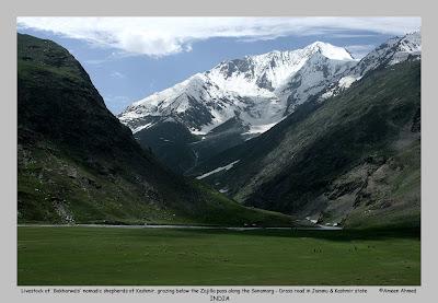 bakharwal, Zojilla Pass, Drass, Sonamarg, Jammu and Kashmir, Kashmir valley, Kargil drive, Baltistan, glaciers, Himalayas, India Himalayas, Baltistan, Indian Kashmir, Leh, Ladhak