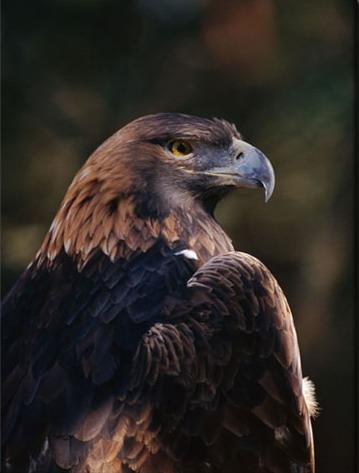 https://i1.wp.com/2.bp.blogspot.com/_pbcwU4x8sv0/TTD2DFXgIKI/AAAAAAAAA9k/-ClNADLsqzw/s1600/chim+o+eagle.jpg
