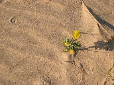 Uma Bela Flor No Deserto Irismar Oliveira