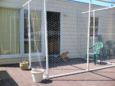 The Very Best Cats The Making Of Our Quot Catio Quot Outdoor