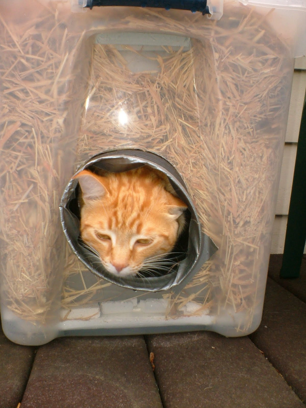 The Very Best Cats How To Make A Winter Shelter For An