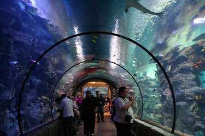 Valid at Aquarium of the Bay located at PIER 39 The Embarcadero & Beach St. San Find Deals Near You· Concerts & Live Events· 1 Billion Groupons Sold· Local, Goods & Getaways,+ followers on Twitter.