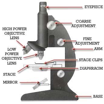 A Well Labelled Diagram Of Microscope International School Bus Engine Compound Light Www Toyskids Co Finley Period 7 Tread Under Quiz
