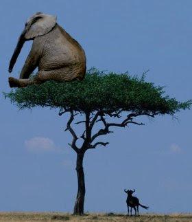 Funny Elephant Joke Image