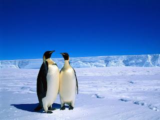 Penguin Christmas Wallpapers Christmas In Antarctica