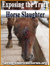 The Face of Horse Slaughter