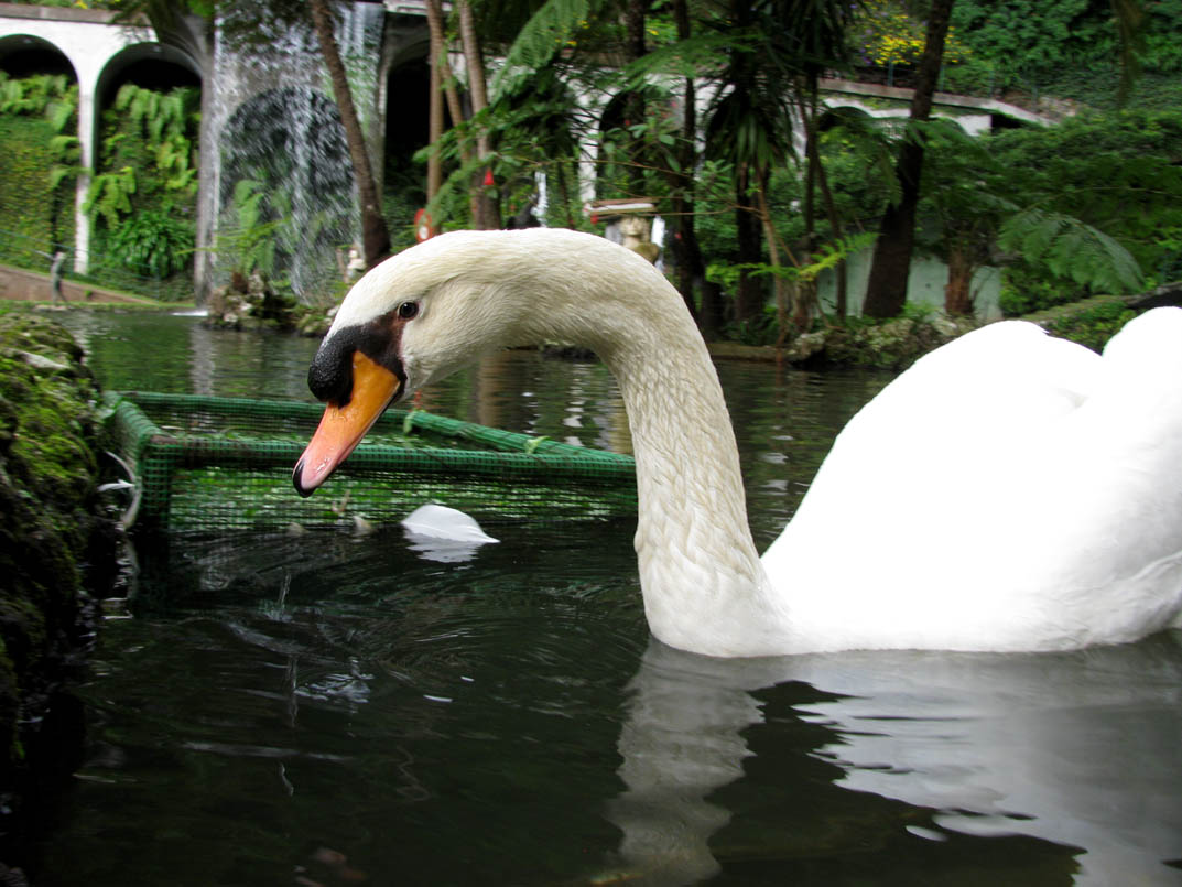 the Goose is looking you
