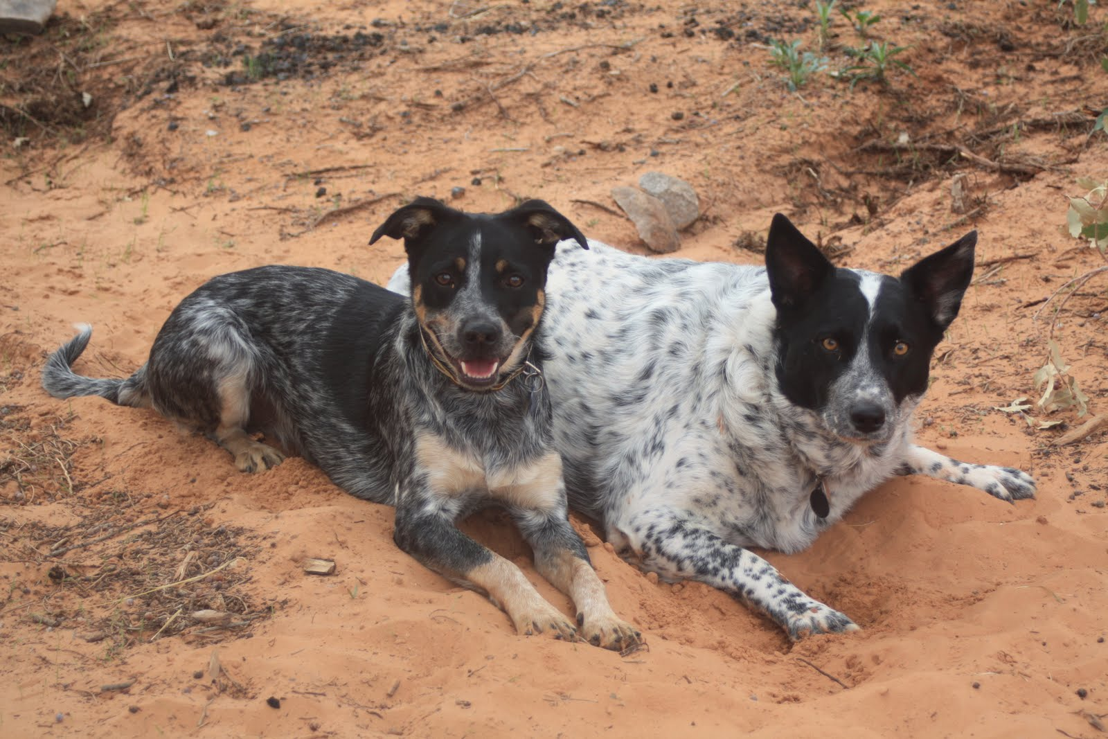 Dog Ranch Rescue