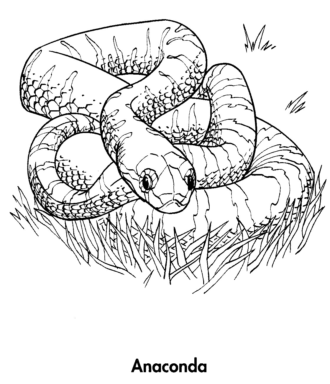 Planet earth animals coloring pages planet best free for Animal planet coloring pages