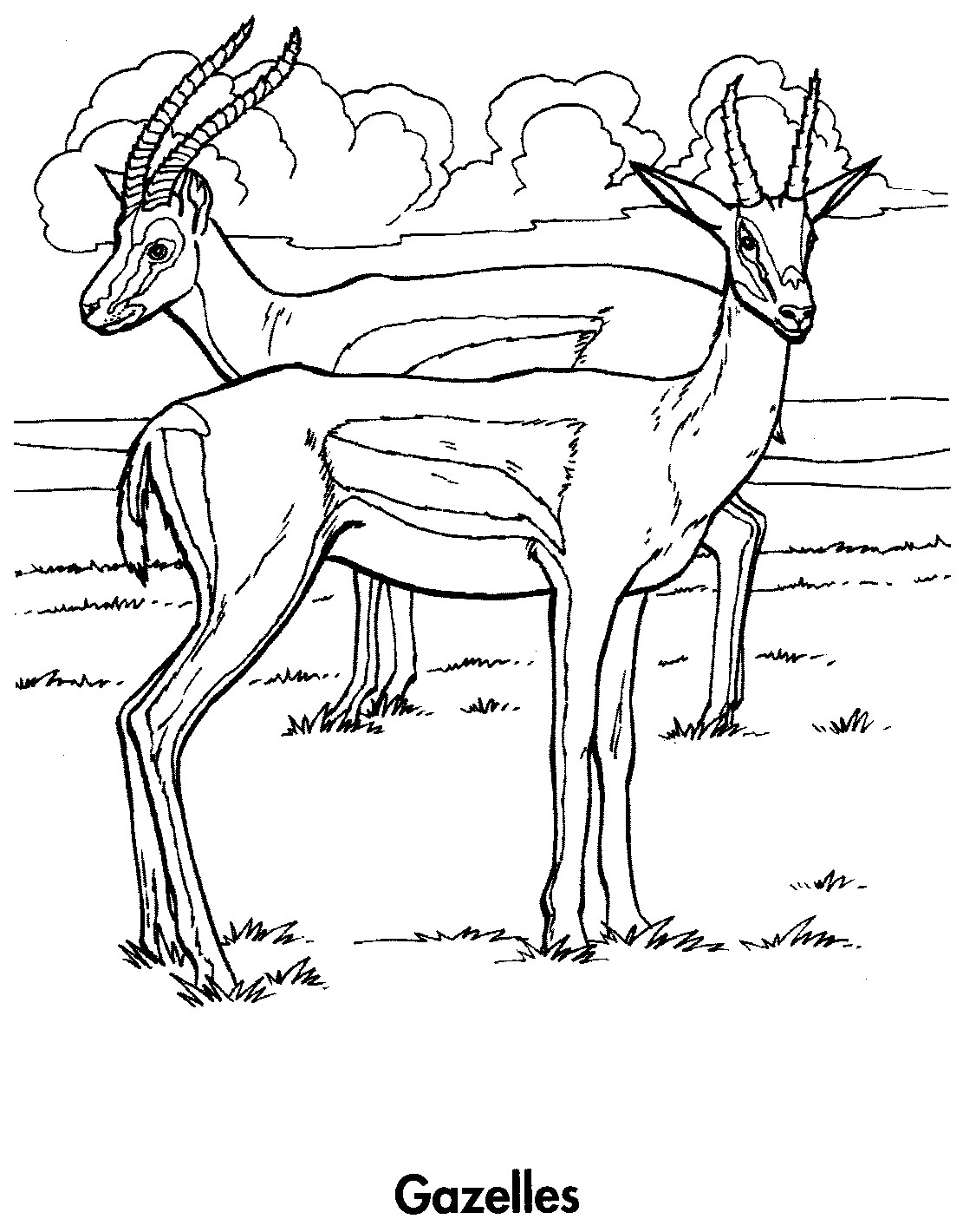 Printable coloring pages of gazelle printable best free for Animal planet coloring pages