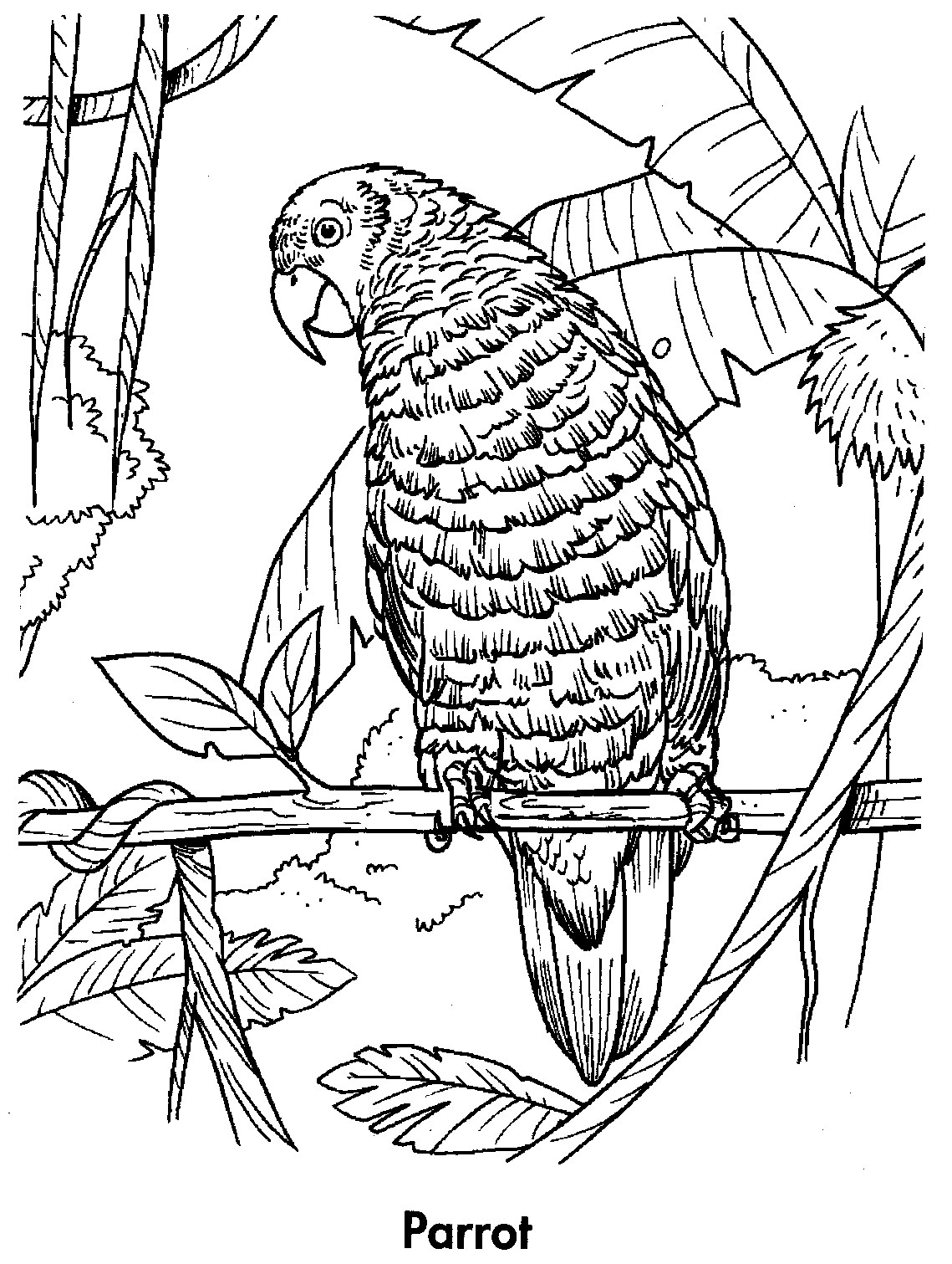sport life: Planet Earth Coloring Book Awesome Animals (95