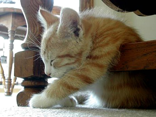 Daily Cool Pictures Gallery: Photos of Extremely Tired ...  Daily Cool Pict...