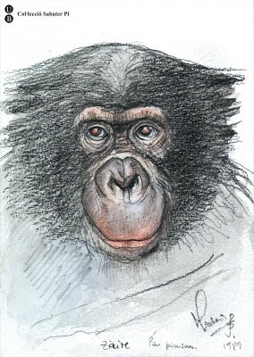 sketch of chimp's face