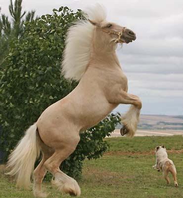 RARE HORSE BREED