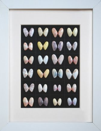 Framed Coauina Shells