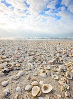 seashell art photography