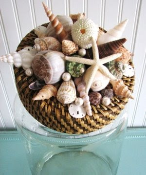seashell jar lid