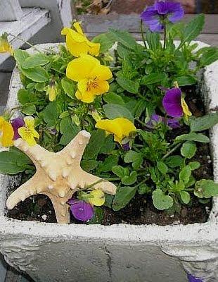 Garden Starfish